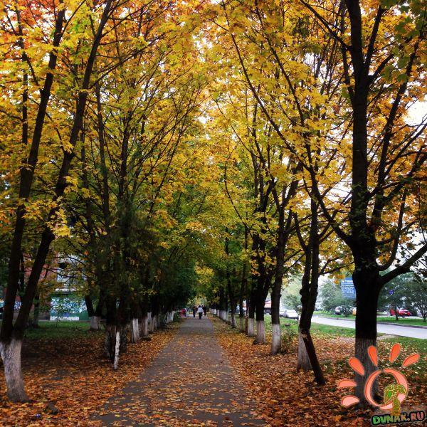 Осень на Зиповской.JPG